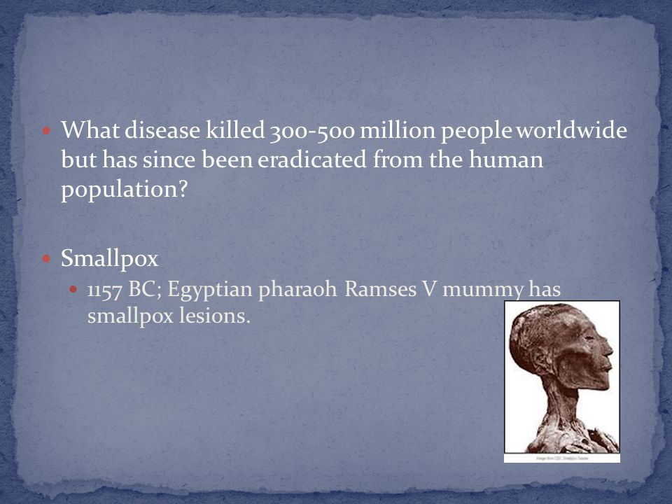 What disease killed 300-500 million people worldwide but has since been eradicated from the human population? Smallpox 1157 BC; Egyptian pharaoh Ramse