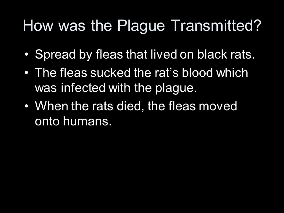 How was the Plague Transmitted. Spread by fleas that lived on black rats.