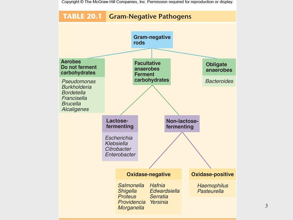 4 Aerobic Gram-Negative Nonenteric Bacilli Pseudomonas and Burkholderia – an opportunistic pathogen Brucella and Francisella – zoonotic pathogens Bordetella and Legionella – mainly human pathogens