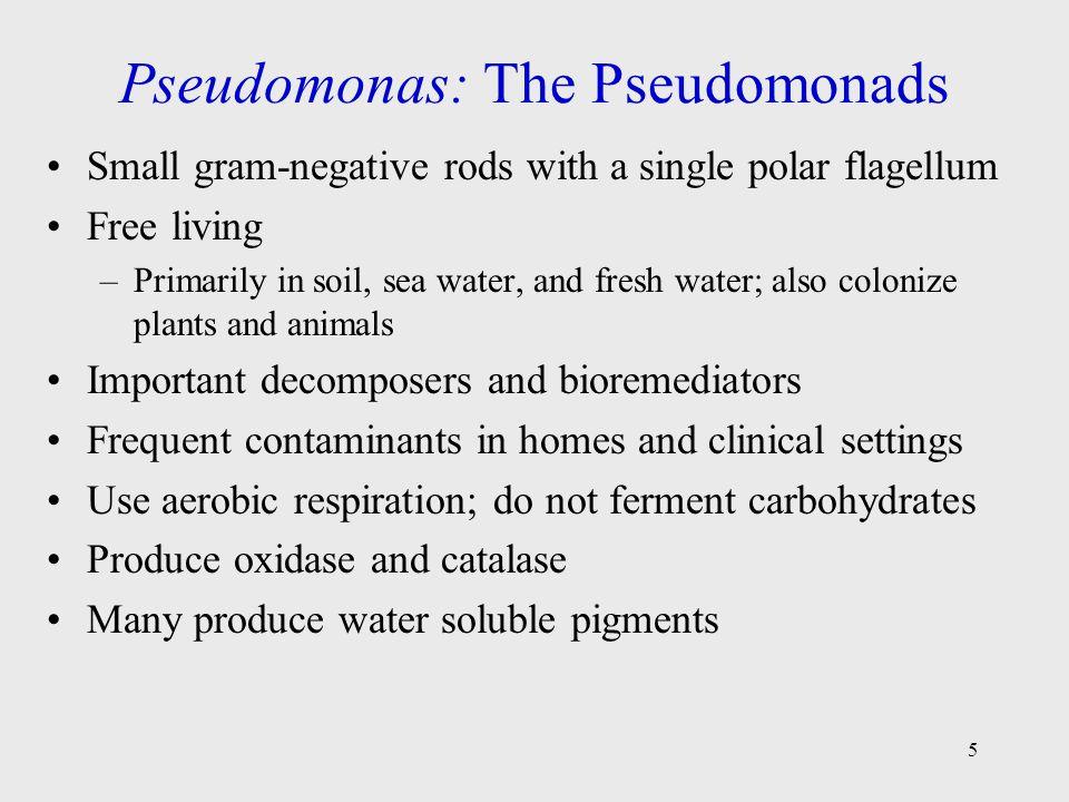 Figure 20.1 Pseudomonas aeruginosa 6
