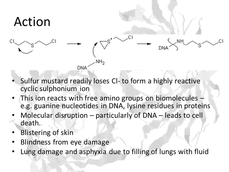 Action Sulfur mustard readily loses Cl- to form a highly reactive cyclic sulphonium ion This ion reacts with free amino groups on biomolecules – e.g.