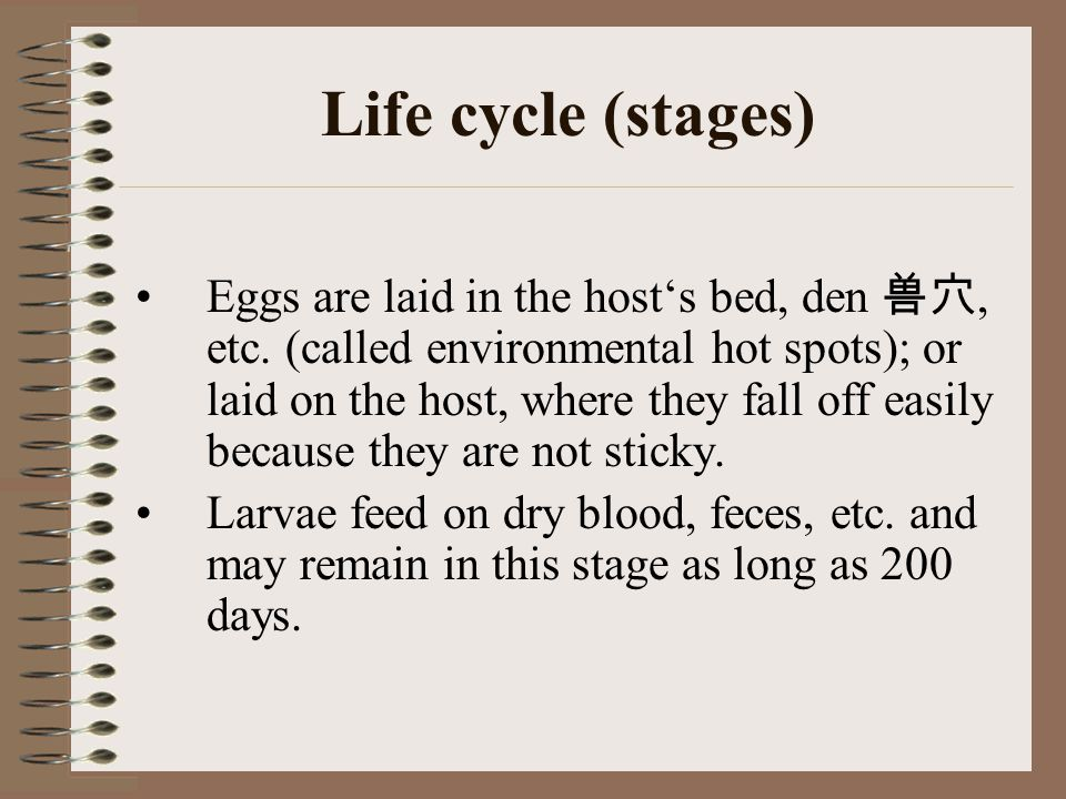 Life cycle (stages) Eggs are laid in the host's bed, den 兽穴, etc. (called environmental hot spots); or laid on the host, where they fall off easily be