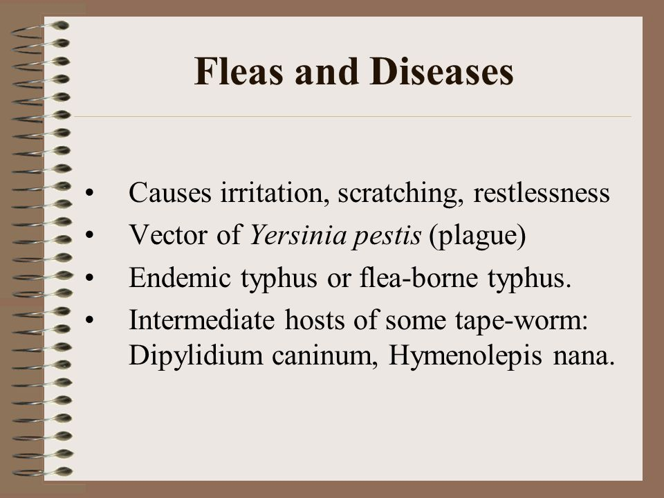 Fleas and Diseases Causes irritation, scratching, restlessness Vector of Yersinia pestis (plague) Endemic typhus or flea-borne typhus.