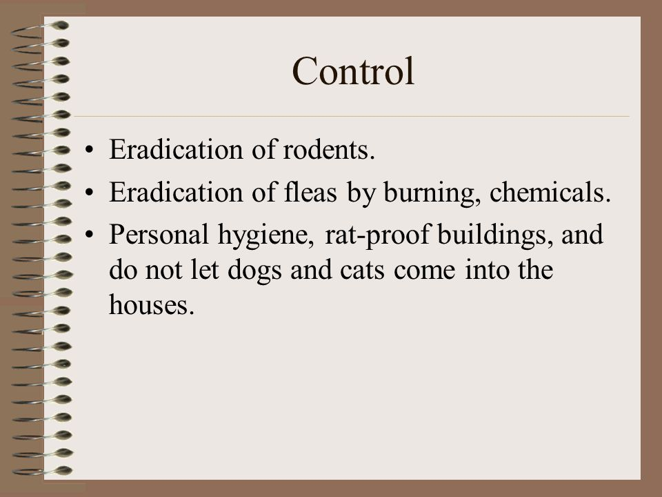 Control Eradication of rodents. Eradication of fleas by burning, chemicals.