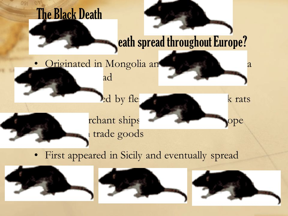 The Black Death How did the Black Death spread throughout Europe? Originated in Mongolia and spread to Black Sea along Silk Road Bacteria carried by f