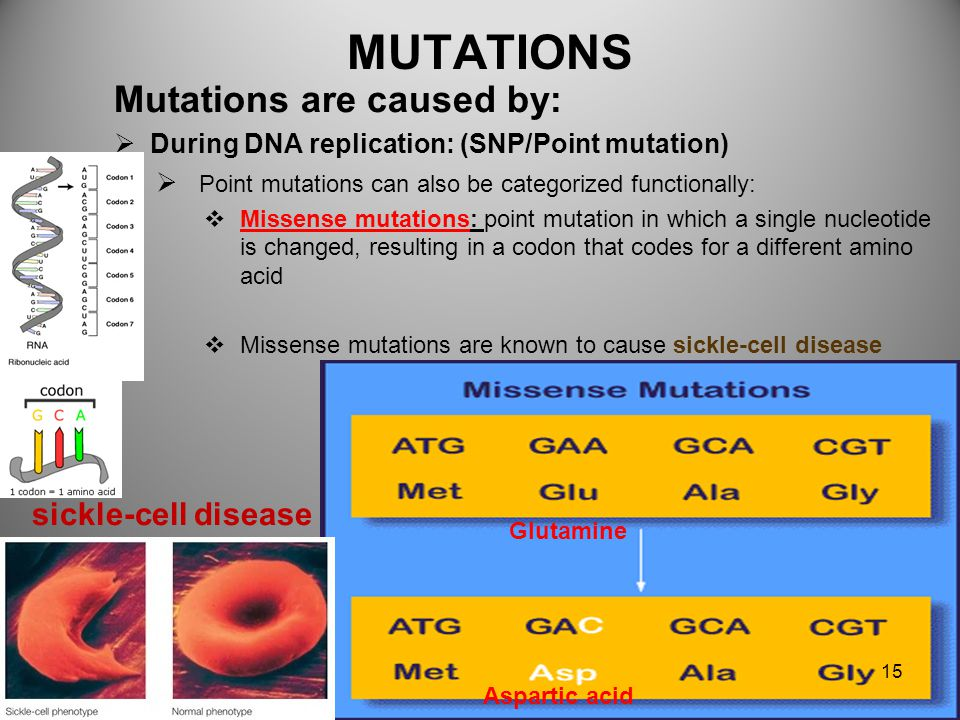 MUTATIONS Mutations are caused:  During DNA replication: (SNP/Point mutation)  Point mutations can also be categorized functionally:  Nonsense muta
