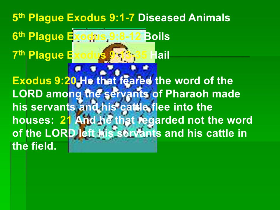 8 th Plague Exodus 10:1-20 Locust Exodus 10:7 And Pharaoh s servants said unto him, How long shall this man be a snare unto us.