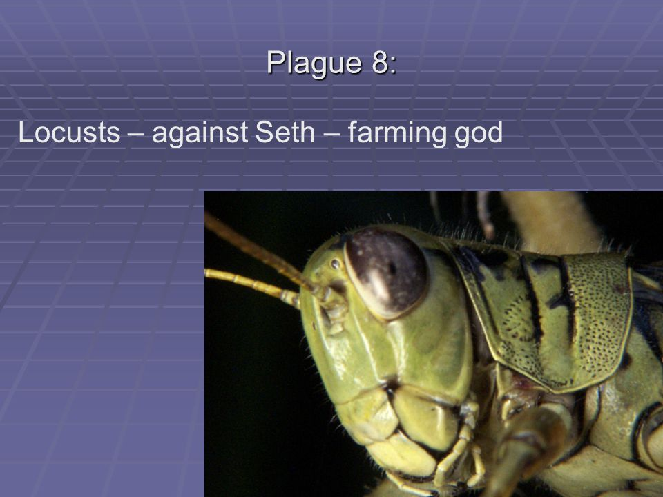 Plague 8: Locusts – against Seth – farming god