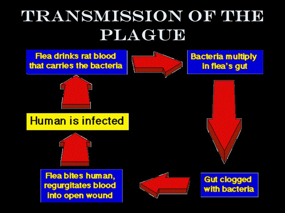 Symptoms of the plague