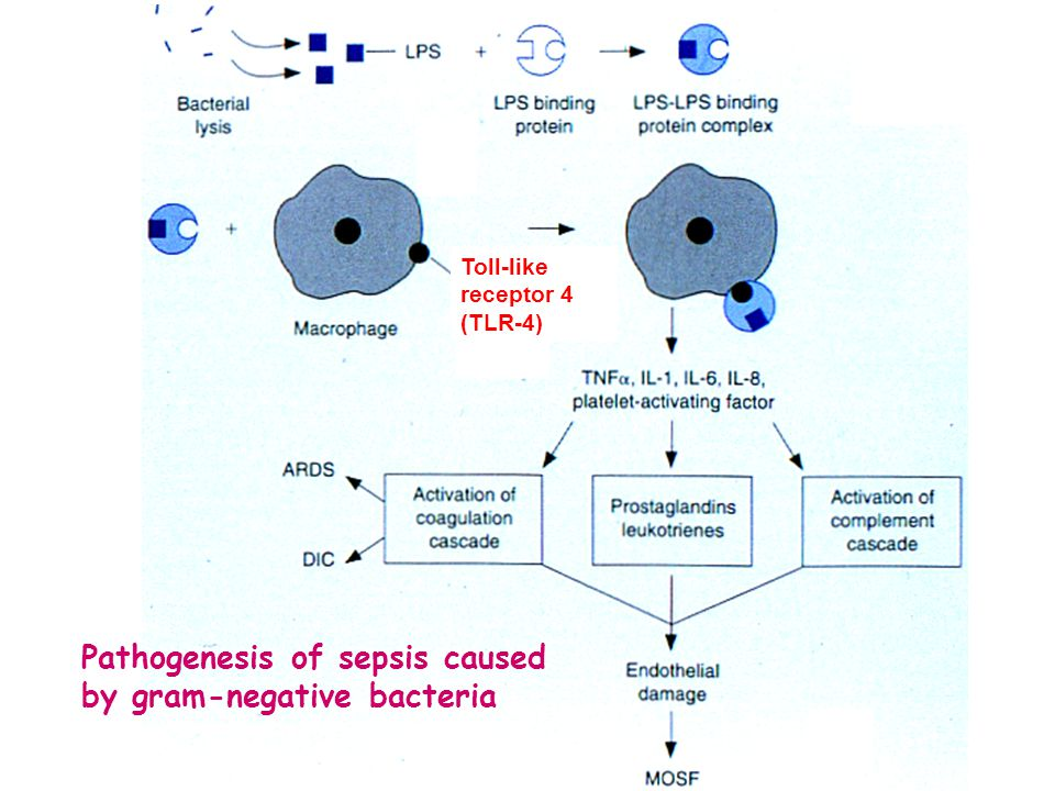 Toll-like receptor 4 (TLR-4) Pathogenesis of sepsis caused by gram-negative bacteria