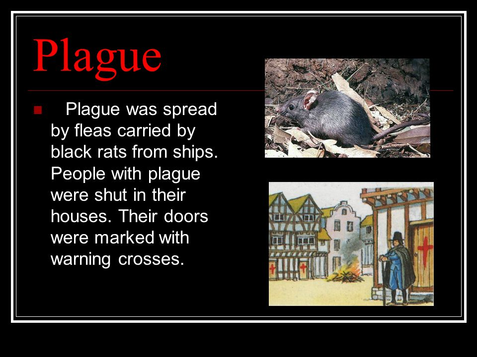 Plague Plague was spread by fleas carried by black rats from ships.