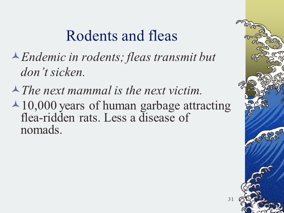 Rodents and fleas Endemic in rodents; fleas transmit but don't sicken. The next mammal is the next victim. 10,000 years of human garbage attracting fl