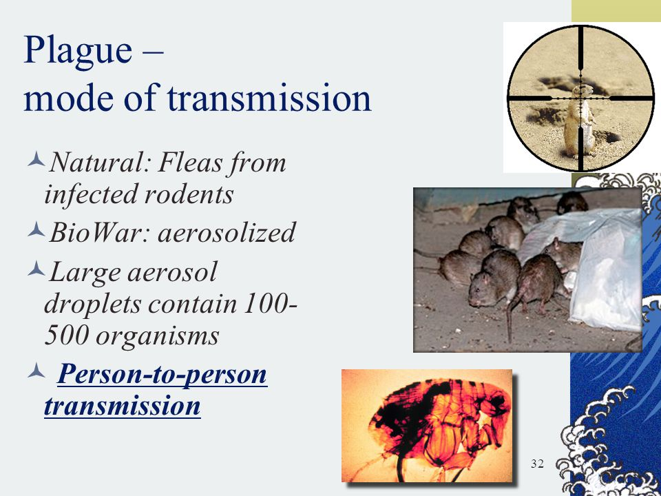 Plague – mode of transmission Natural: Fleas from infected rodents BioWar: aerosolized Large aerosol droplets contain 100- 500 organisms Person-to-per