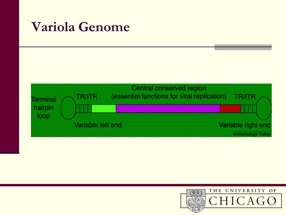 Variola Genome