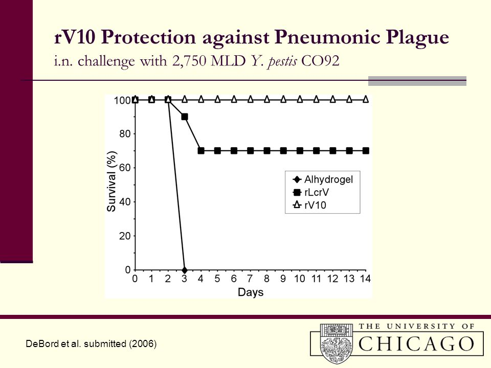 rV10 Protection against Pneumonic Plague i.n.challenge with 2,750 MLD Y.