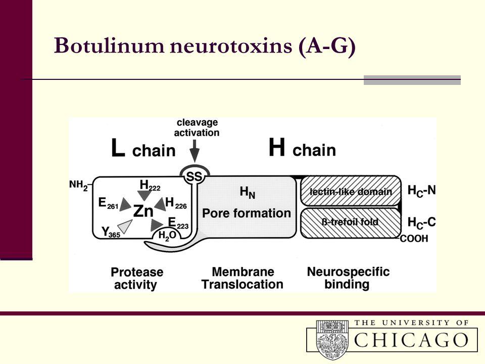 Botulinum neurotoxins (A-G)