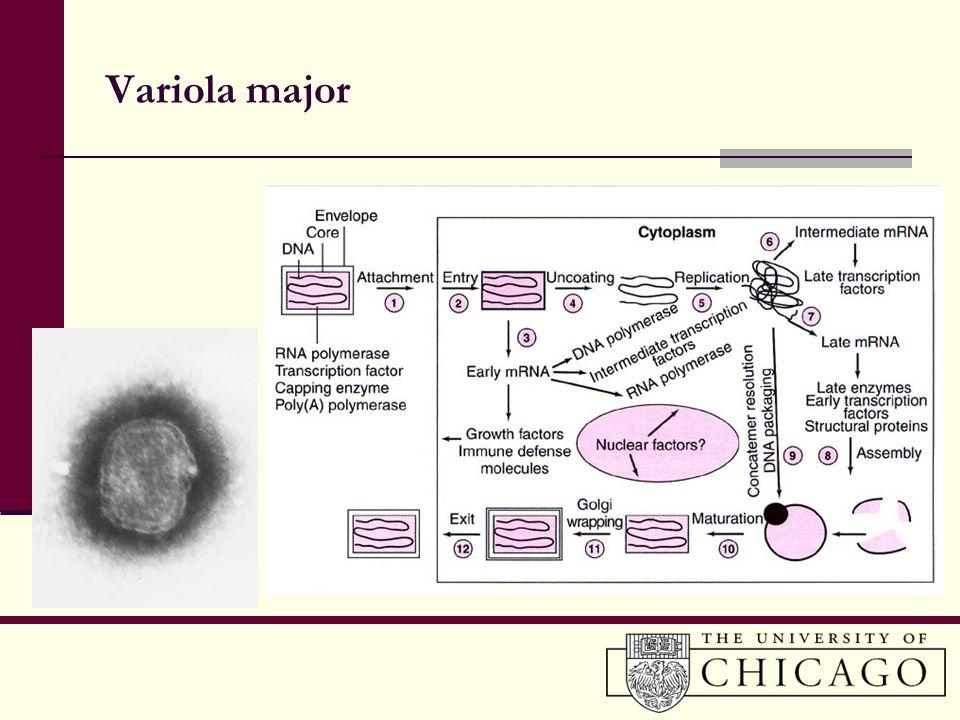 Variola major