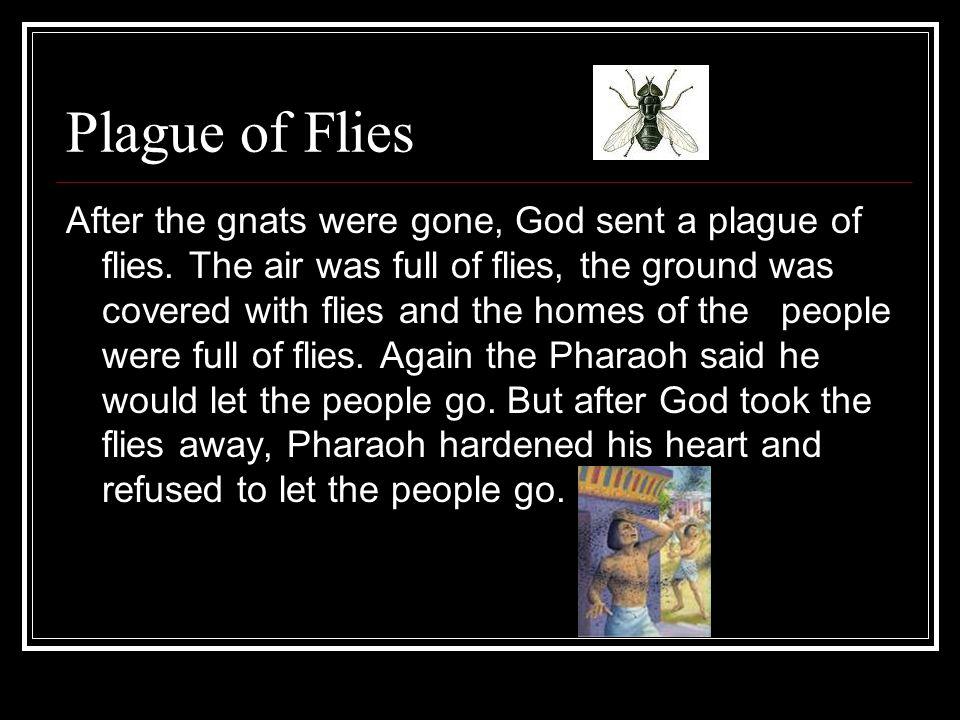 Plague of Flies After the gnats were gone, God sent a plague of flies.