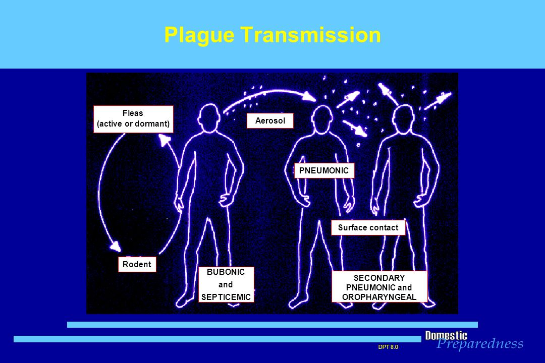 DPT 8.0 Plague Transmission PNEUMONIC BUBONIC and SEPTICEMIC SECONDARY PNEUMONIC and OROPHARYNGEAL Fleas (active or dormant) Rodent Aerosol Surface contact