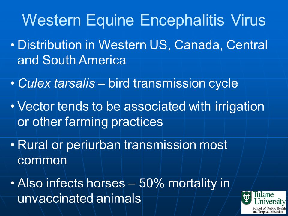 Western Equine Encephalitis Virus Distribution in Western US, Canada, Central and South America Culex tarsalis – bird transmission cycle Vector tends
