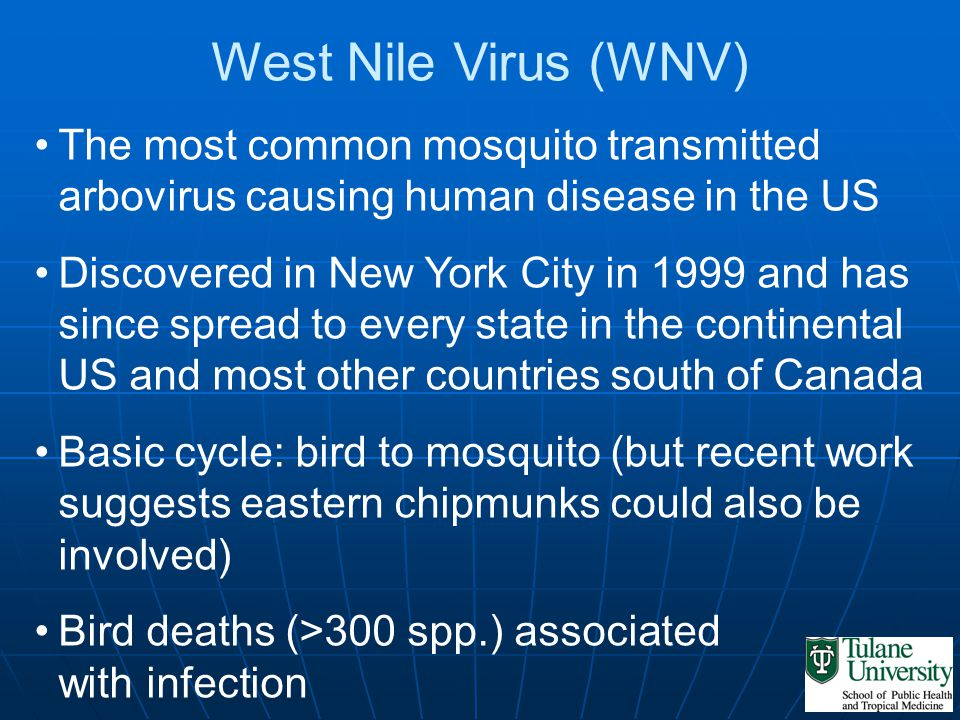 West Nile Virus (WNV) The most common mosquito transmitted arbovirus causing human disease in the US Discovered in New York City in 1999 and has since