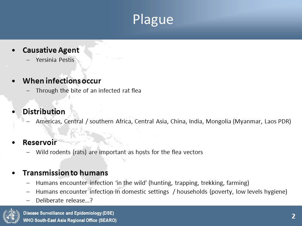 2 Disease Surveillance and Epidemiology (DSE) WHO South-East Asia Regional Office (SEARO) Plague Causative Agent –Yersinia Pestis When infections occu