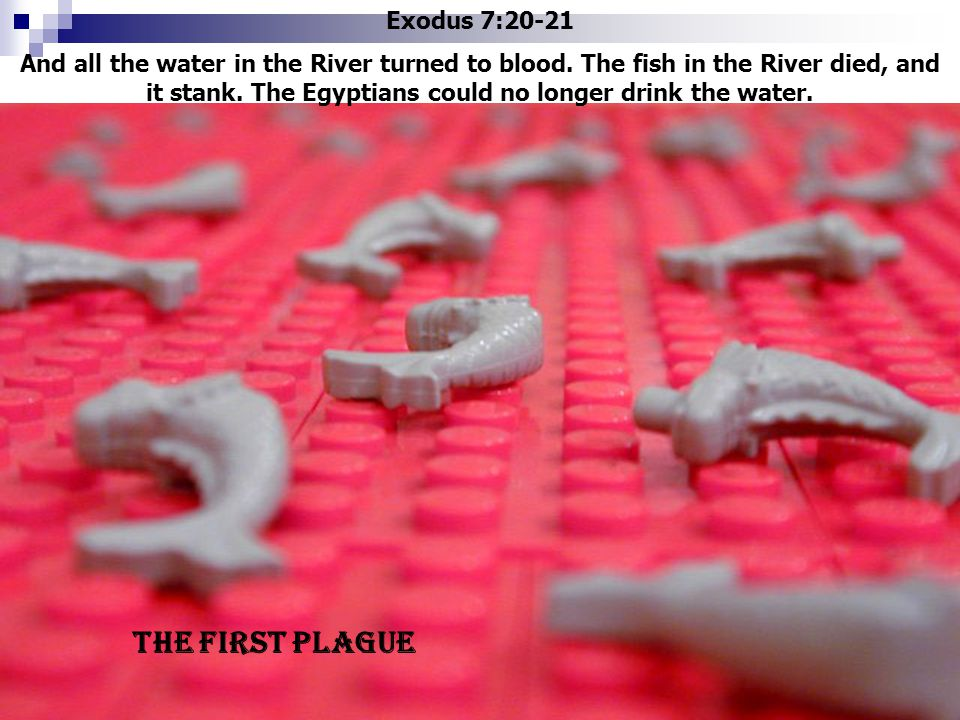 Exodus 7:20-21 And all the water in the River turned to blood. The fish in the River died, and it stank. The Egyptians could no longer drink the water