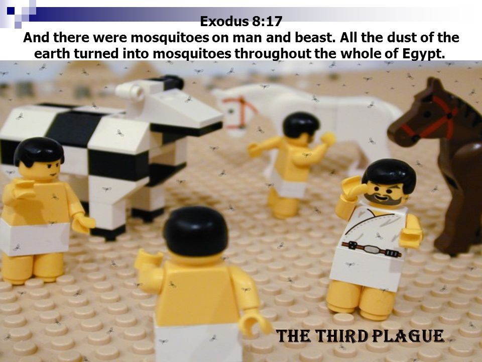 Exodus 8:17 And there were mosquitoes on man and beast. All the dust of the earth turned into mosquitoes throughout the whole of Egypt. The third plag