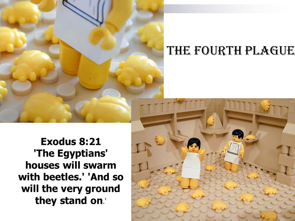Exodus 8:21 'The Egyptians' houses will swarm with beetles.' 'And so will the very ground they stand on.' The fourth plague