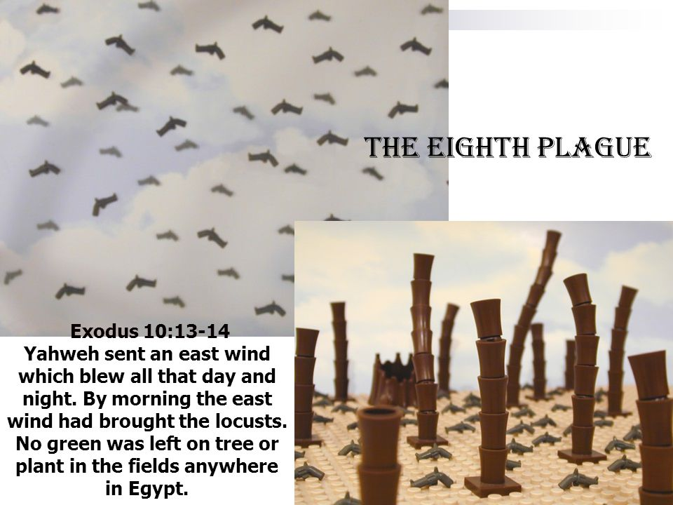 Exodus 10:13-14 Yahweh sent an east wind which blew all that day and night. By morning the east wind had brought the locusts. No green was left on tre