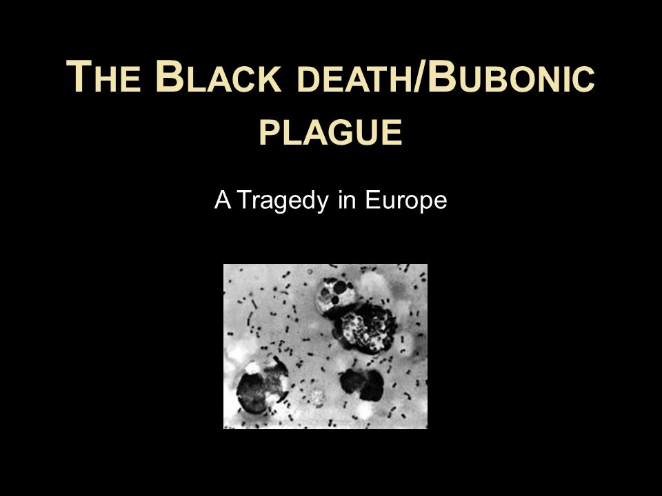 T HE B LACK DEATH /B UBONIC PLAGUE A Tragedy in Europe