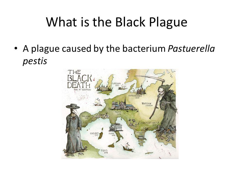 A plague caused by the bacterium Pastuerella pestis What is the Black Plague
