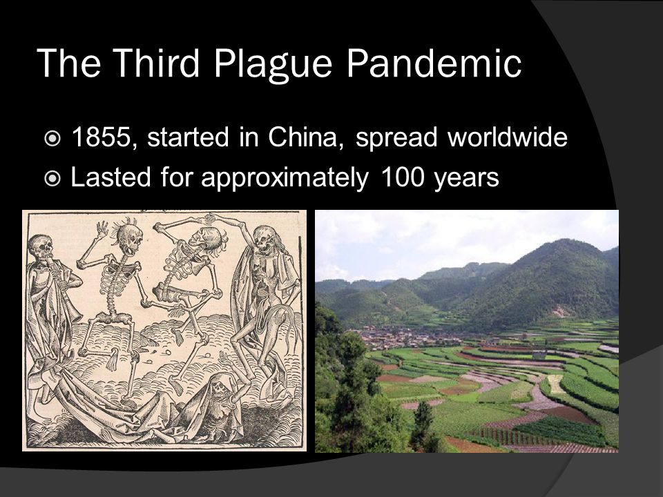 The Third Plague Pandemic  1855, started in China, spread worldwide  Lasted for approximately 100 years