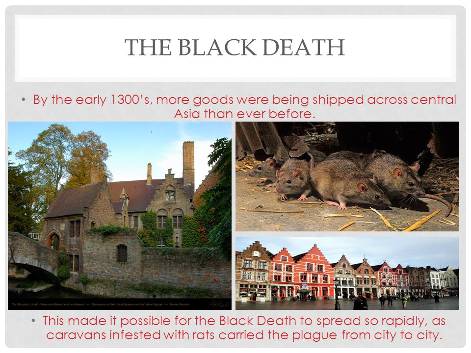 THE BLACK DEATH By the early 1300's, more goods were being shipped across central Asia than ever before. This made it possible for the Black Death to
