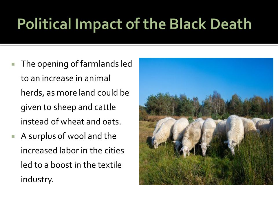  The opening of farmlands led to an increase in animal herds, as more land could be given to sheep and cattle instead of wheat and oats.  A surplus