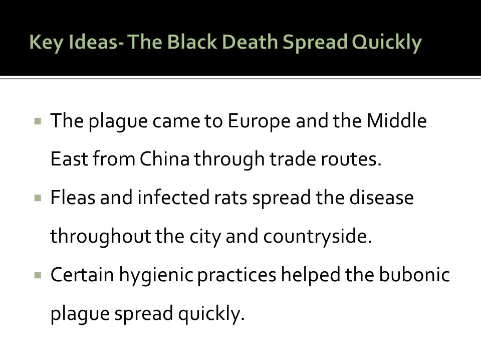  The plague came to Europe and the Middle East from China through trade routes.  Fleas and infected rats spread the disease throughout the city and