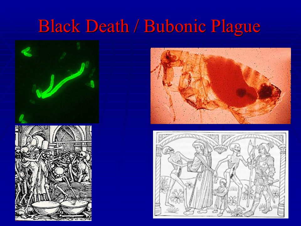 Black Death / Bubonic Plague