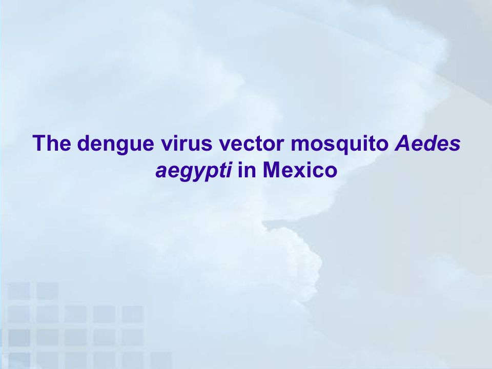 The dengue virus vector mosquito Aedes aegypti in Mexico
