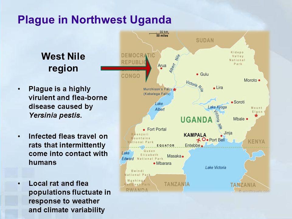 Plague in Northwest Uganda Plague is a highly virulent and flea-borne disease caused by Yersinia pestis.