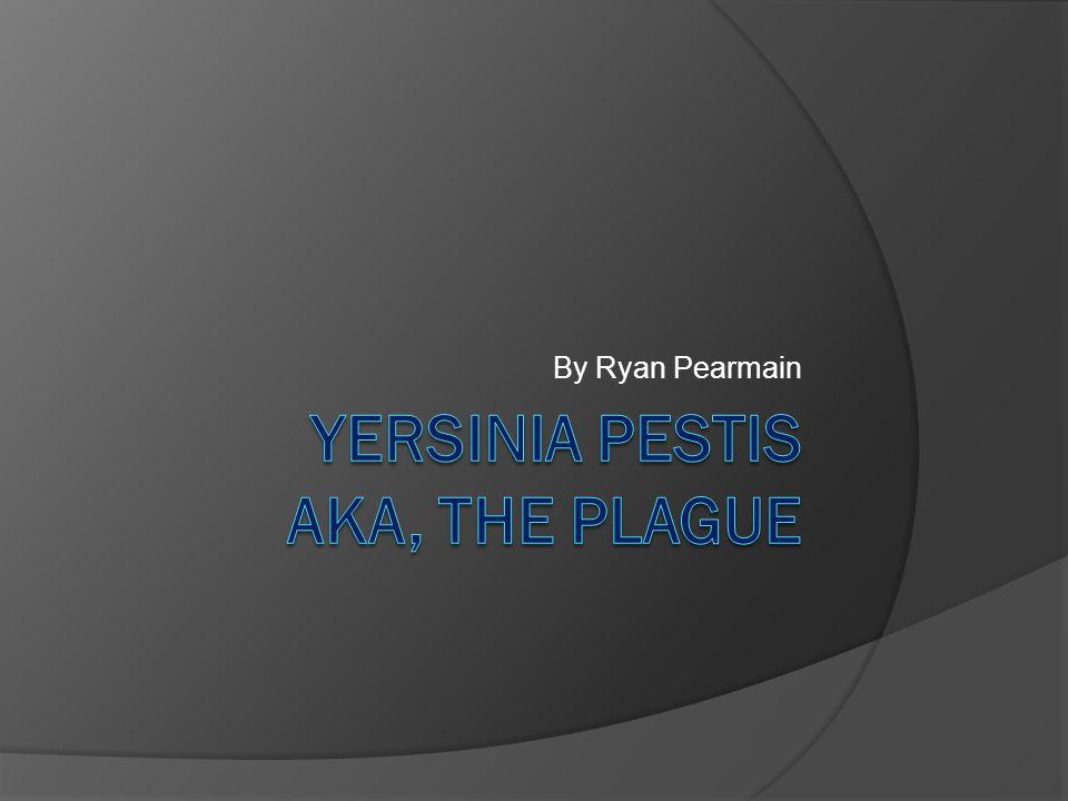 What is Yersinia Pestis.