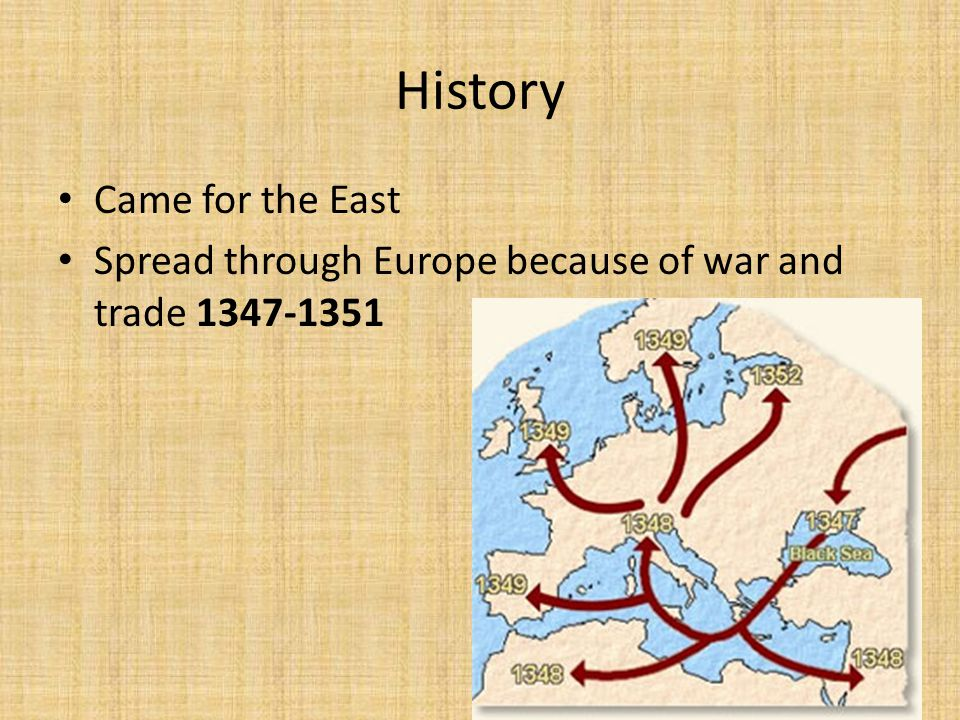 History Came for the East Spread through Europe because of war and trade 1347-1351