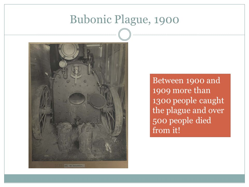 Bubonic Plague, 1900 Between 1900 and 1909 more than 1300 people caught the plague and over 500 people died from it!