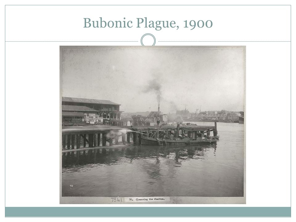 Bubonic Plague, 1900