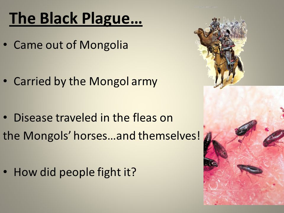 The Black Plague… Came out of Mongolia Carried by the Mongol army Disease traveled in the fleas on the Mongols' horses…and themselves! How did people