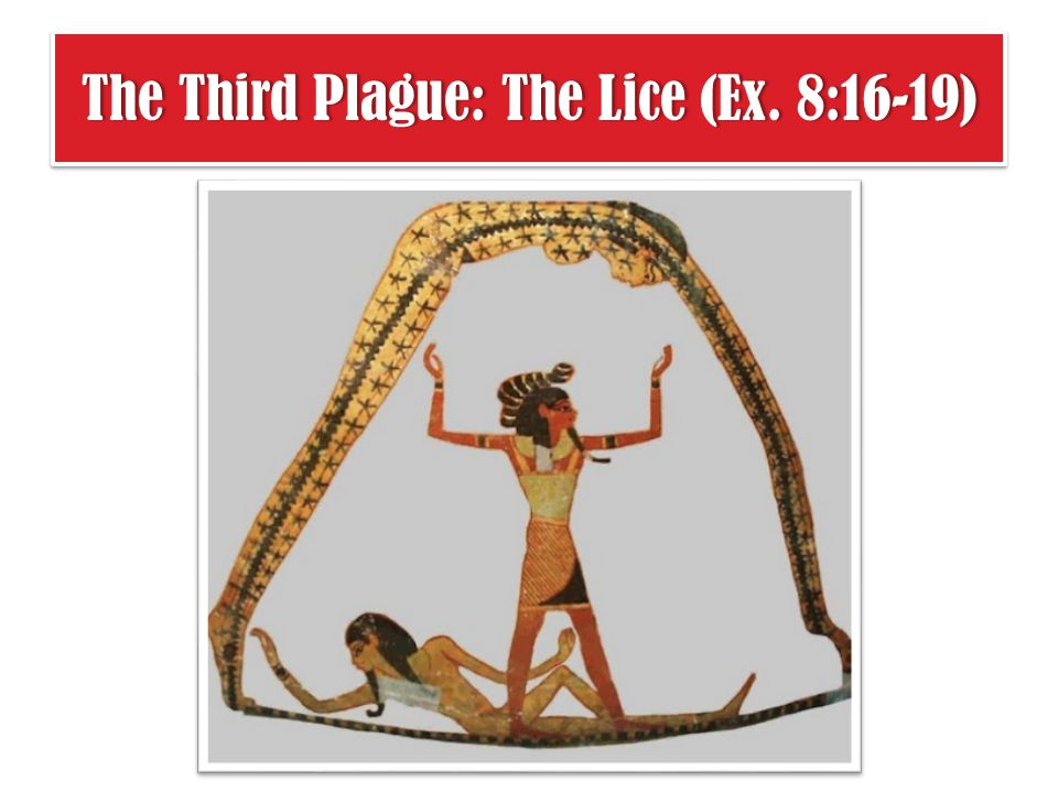 The Third Plague: The Lice (Ex. 8:16-19)The Third Plague: The Lice (Ex. 8:16-19)