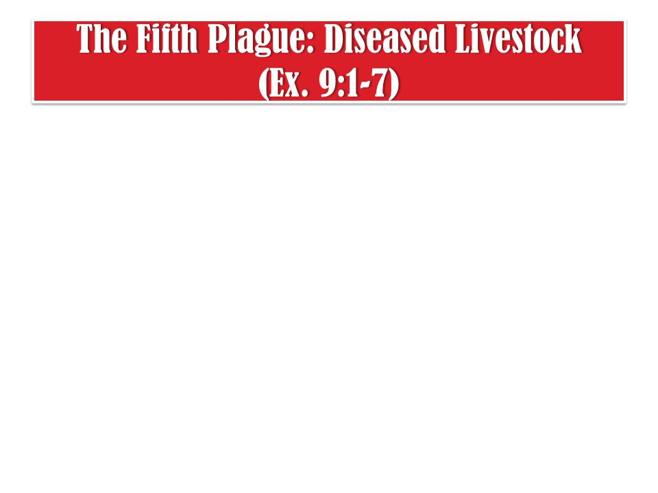 The Fifth Plague: Diseased Livestock (Ex. 9:1-7)