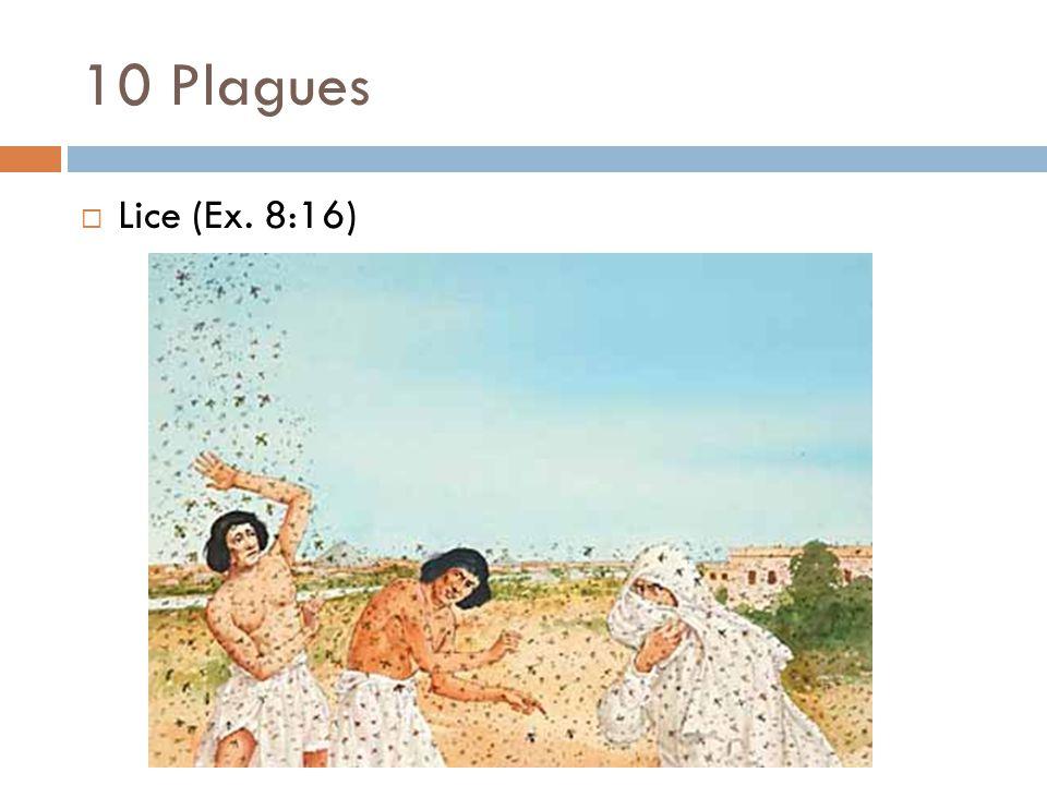 10 Plagues  Lice (Ex. 8:16)
