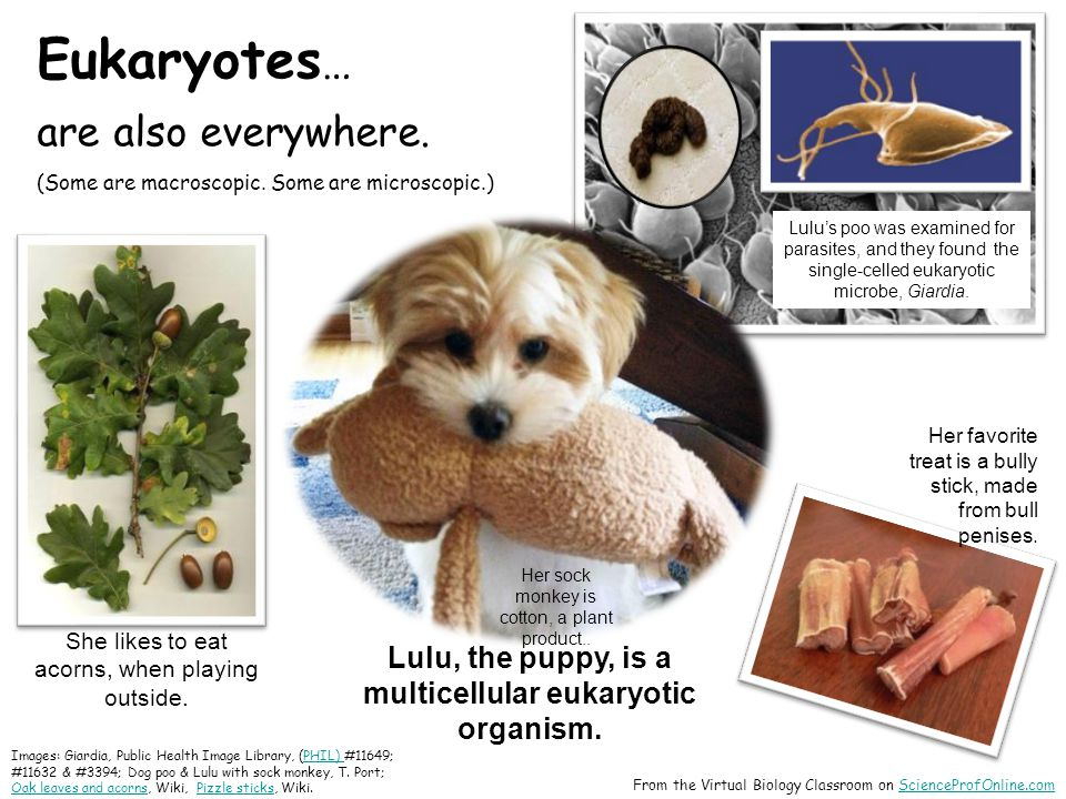 Eukaryotes … are also everywhere. (Some are macroscopic.