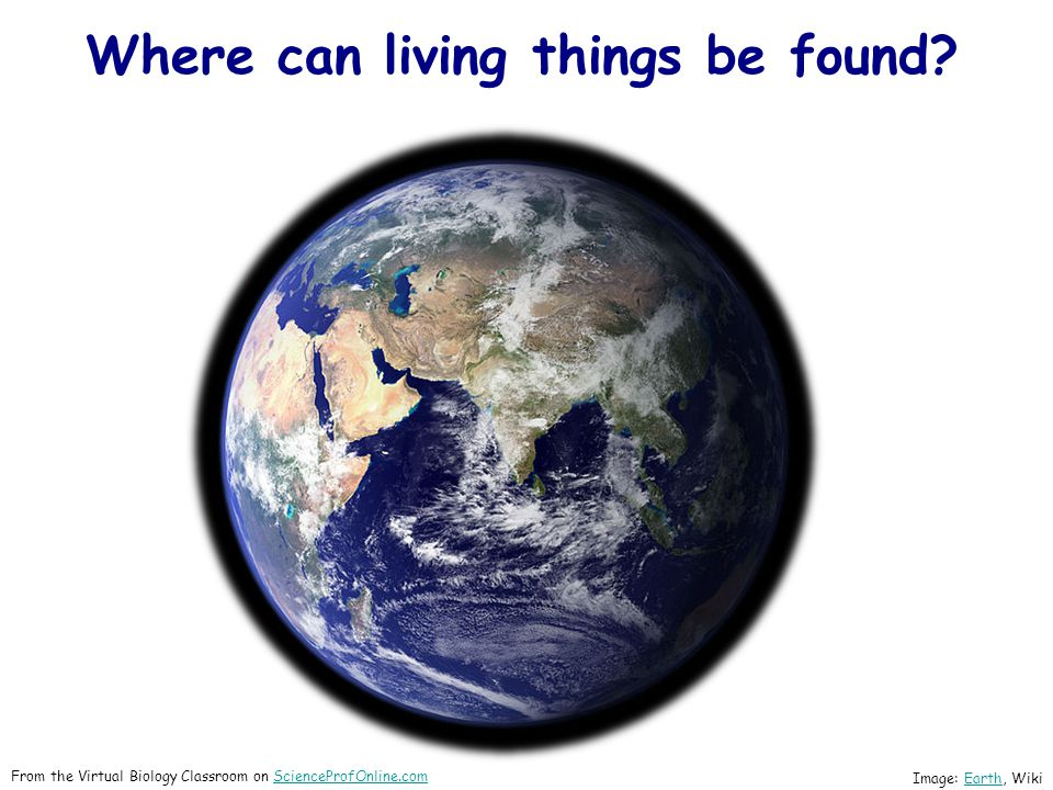 Where can living things be found.
