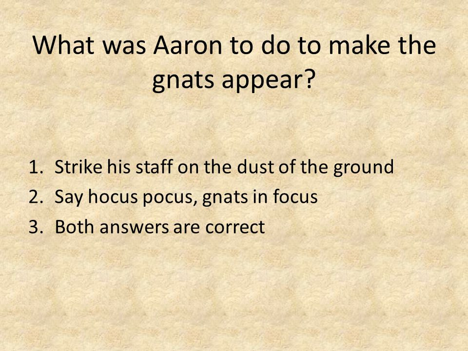 What was Aaron to do to make the gnats appear.